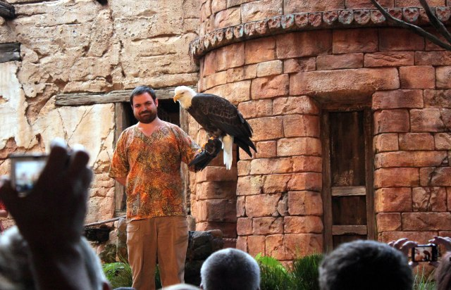 The bald eagle gets all the crowd attention, and all the other exotic birds are jealous.