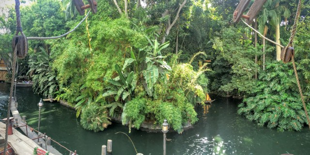 "The trees in Disneyland were looking a little ""jungle-y."""