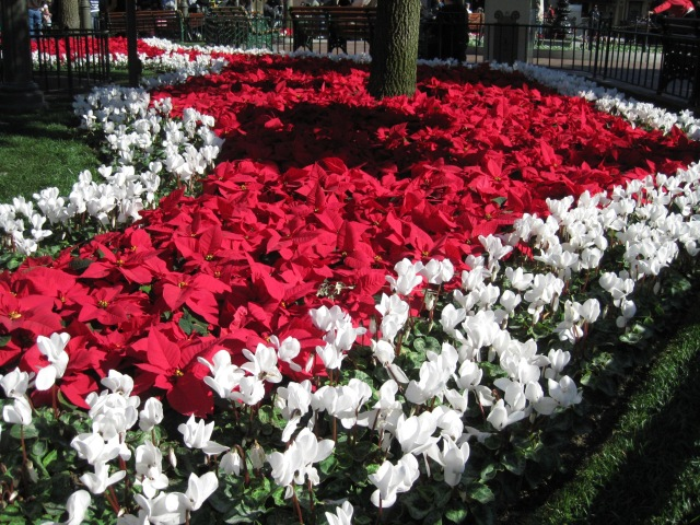 The flowers in Main Street, U.S.A. get into the Holiday spirit, as well.
